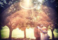 wedding title