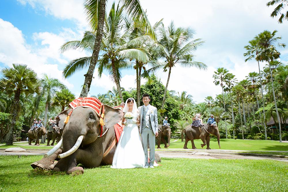 elephantw02